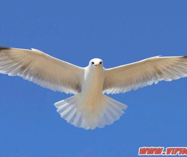 ทำนายฝันว่าเห็นนก หมายถึงอะไรและเป็นลงร้ายหรือไม่